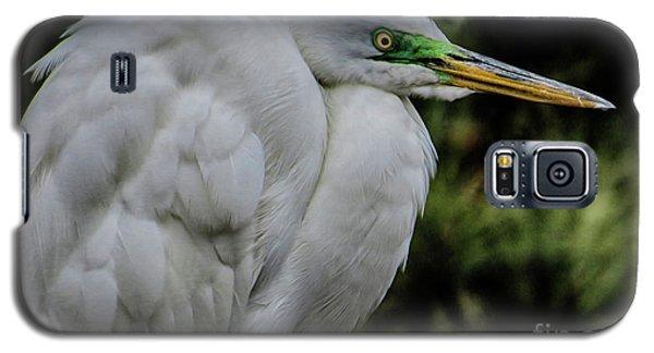 Snowy Egrets Galaxy S5 Case