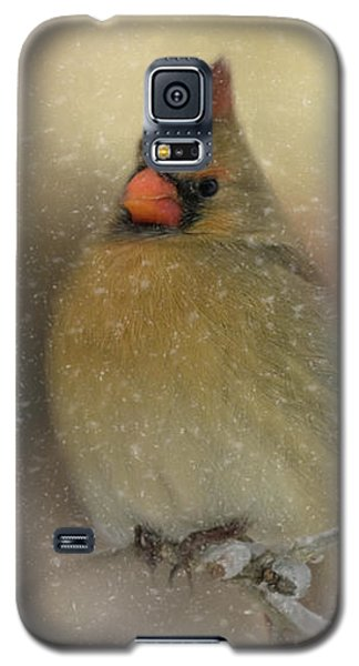 Snowy Female Cardinal Galaxy S5 Case by Lana Trussell