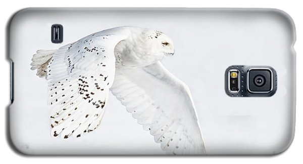 Snowy Flight Galaxy S5 Case by CR  Courson