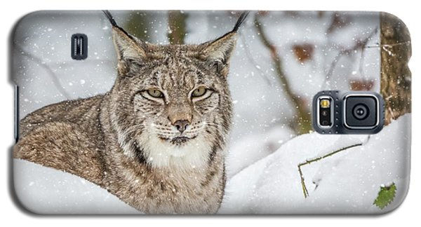 Snowy Lynx Galaxy S5 Case