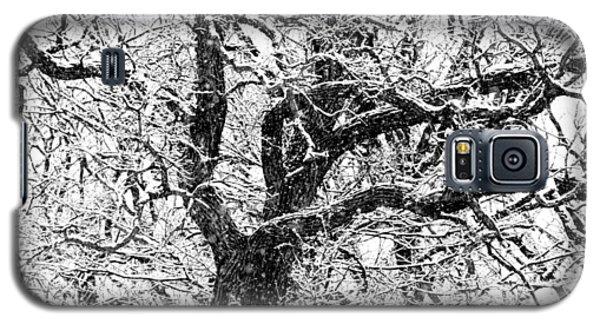 Snowy Oak Galaxy S5 Case