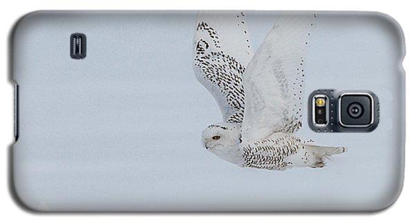 Snowy Owl #3/3 Galaxy S5 Case by Patti Deters