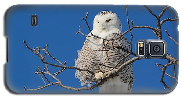 Snowy Owl 7 Galaxy S5 Case