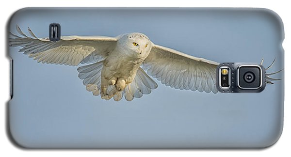 Snowy Owl Against Blue Sky Galaxy S5 Case by CR  Courson