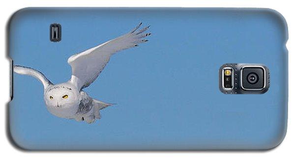 Snowy Owl - Dive Galaxy S5 Case by Dan Traun