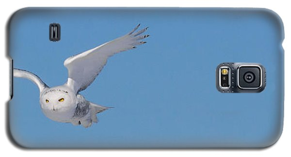 Galaxy S5 Case featuring the photograph Snowy Owl - Dive by Dan Traun