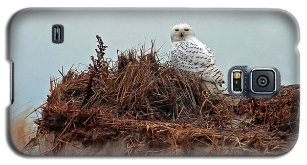 Snowy Owl In Dunes Galaxy S5 Case
