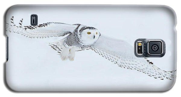 Snowy Owl In Flight Galaxy S5 Case