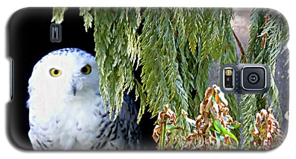 Galaxy S5 Case featuring the photograph Snowy Owl by Janice Spivey