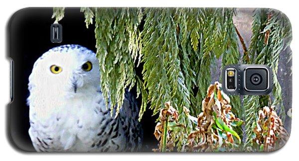 Snowy Owl Galaxy S5 Case by Janice Spivey