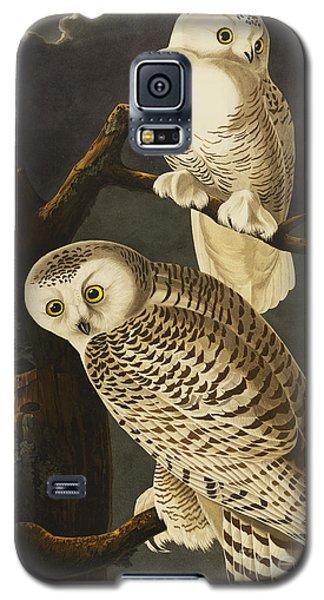 Audubon Galaxy S5 Case - Snowy Owl by John James Audubon
