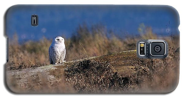 Galaxy S5 Case featuring the photograph Snowy Owl On Log by Sharon Talson