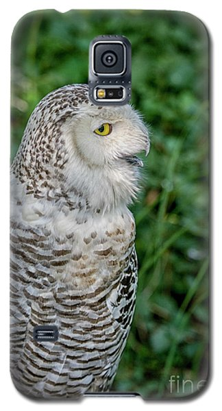 Galaxy S5 Case featuring the photograph Snowy Owl by Patricia Hofmeester
