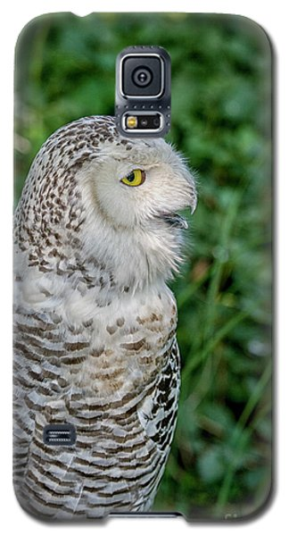 Snowy Owl Galaxy S5 Case by Patricia Hofmeester