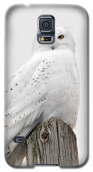 Snowy Owl Portrait Galaxy S5 Case by Timothy McIntyre