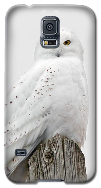 Snowy Owl Portrait Galaxy S5 Case