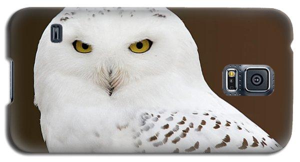 Snowy Owl Galaxy S5 Case by Steve Stuller