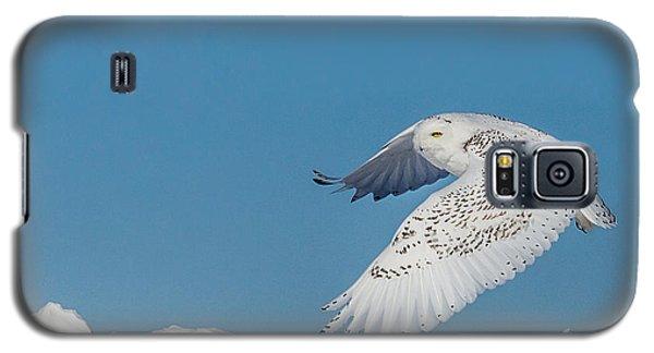 Snowy Owl - Taking Flighty Galaxy S5 Case by Dan Traun
