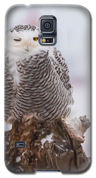 Snowy Owl Winking Galaxy S5 Case