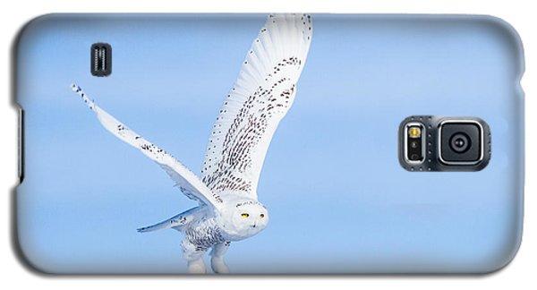 Snowy Owls Soaring Galaxy S5 Case