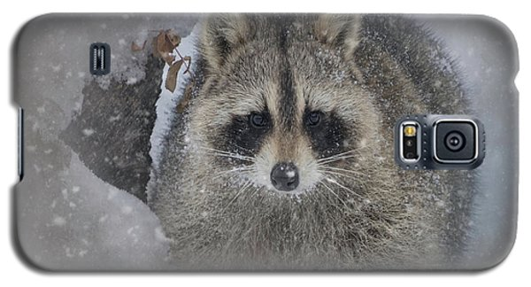 Snowy Raccoon Galaxy S5 Case