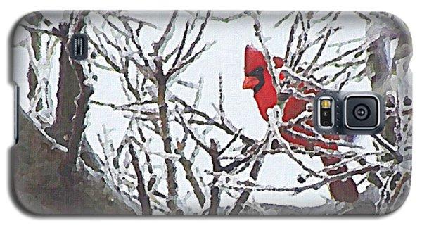 Snowy Red Bird A Cardinal In Winter Galaxy S5 Case