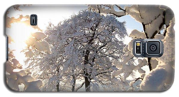 Snowy Trees Galaxy S5 Case