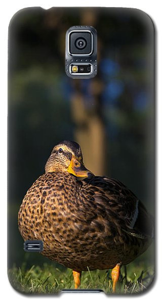Galaxy S5 Case featuring the photograph Soak Up The Sun by Mark Papke