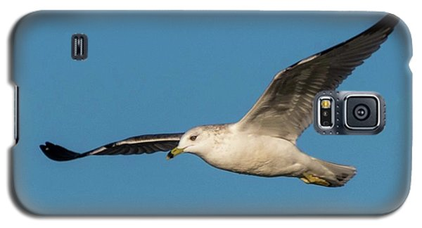Soaring Gull Galaxy S5 Case