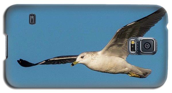 Soaring Gull Galaxy S5 Case