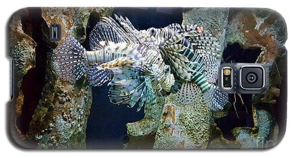 Socializing Fish Galaxy S5 Case