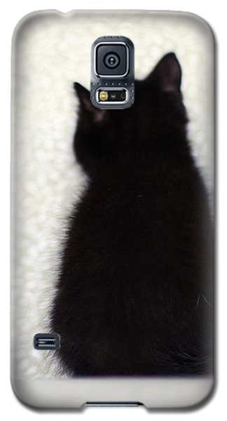 Galaxy S5 Case featuring the photograph Sitting Kitty by Amy Tyler