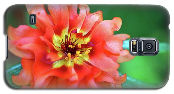 Soft Peach Ruffled Petals Galaxy S5 Case by Sue Melvin