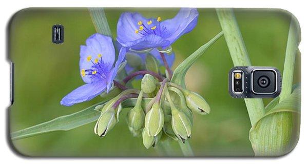Soft Purple Spider Galaxy S5 Case