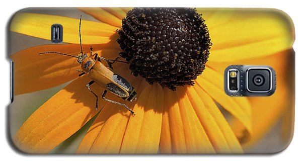 Soldier Beetle On His Flower Galaxy S5 Case