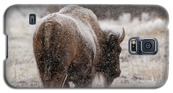 American Bison In Snow Galaxy S5 Case