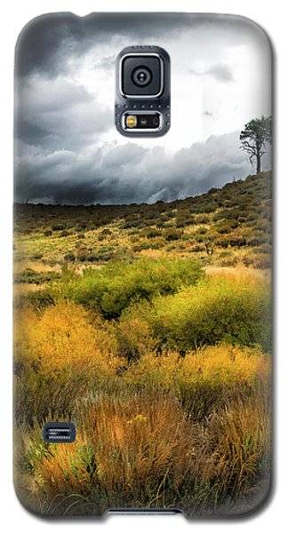 Galaxy S5 Case featuring the photograph Solitary Pine by Frank Wilson