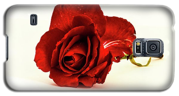 Red Rose Bud Galaxy S5 Case