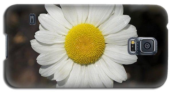 Solo Daisy Galaxy S5 Case
