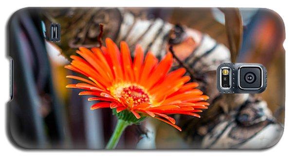 Solo Tangerine Dream Galaxy S5 Case