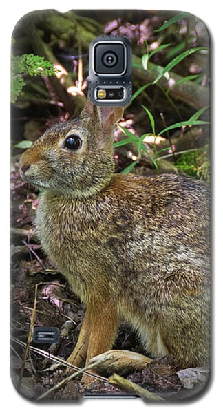 Galaxy S5 Case featuring the photograph Some Bunny Stopped By by Bill Pevlor