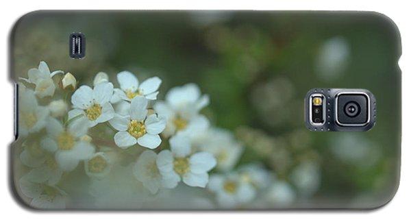 Some Gentle Feelings Galaxy S5 Case by Rachel Mirror