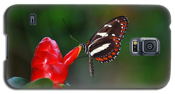 Galaxy S5 Case featuring the photograph Something Red by Teresa Blanton