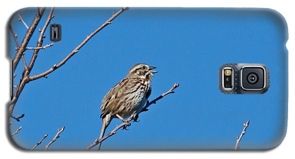 Song Sparrow Galaxy S5 Case by Michael Peychich