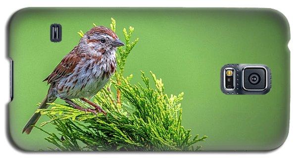 Song Sparrow Perched - Melospiza Melodia Galaxy S5 Case