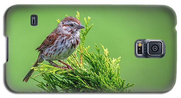 Song Sparrow Perched - Melospiza Melodia Galaxy S5 Case