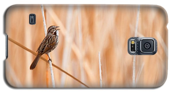 Song Sparrow Galaxy S5 Case