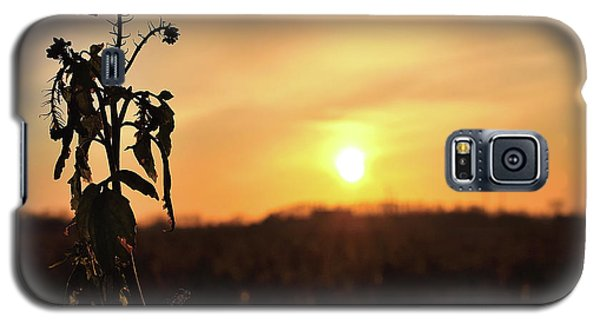 Galaxy S5 Case - Sonnenuntergang by Scimitarable
