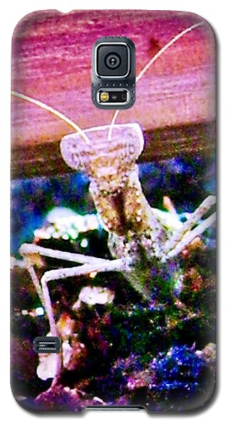 Sonoran Desert Ground Mantis Galaxy S5 Case