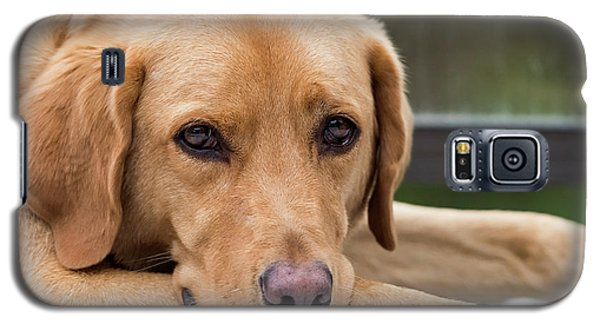 Galaxy S5 Case featuring the photograph Soulful Eyes by Kathy King